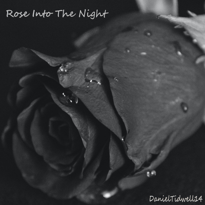 Rose Into The Night