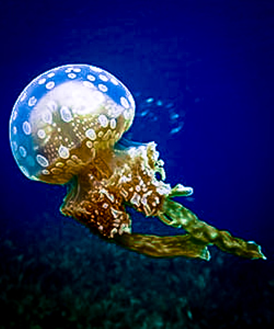 Life of a Jellyfish