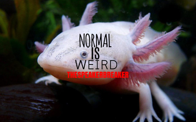 NORMAL IS WEIRD